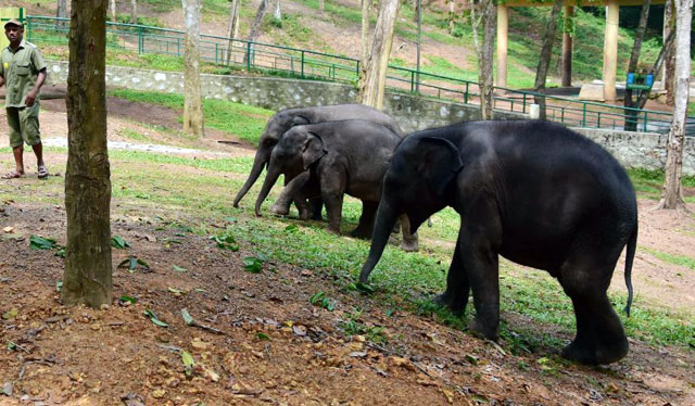 Kottur Elephant rehabilitation centre